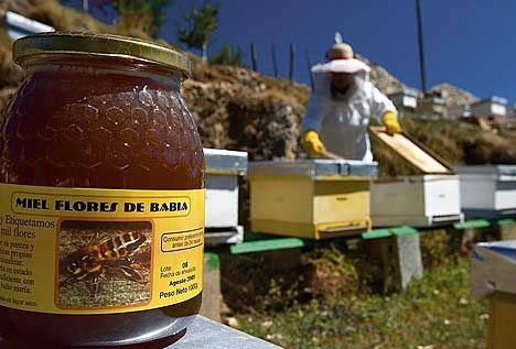 miel Flores de Babia